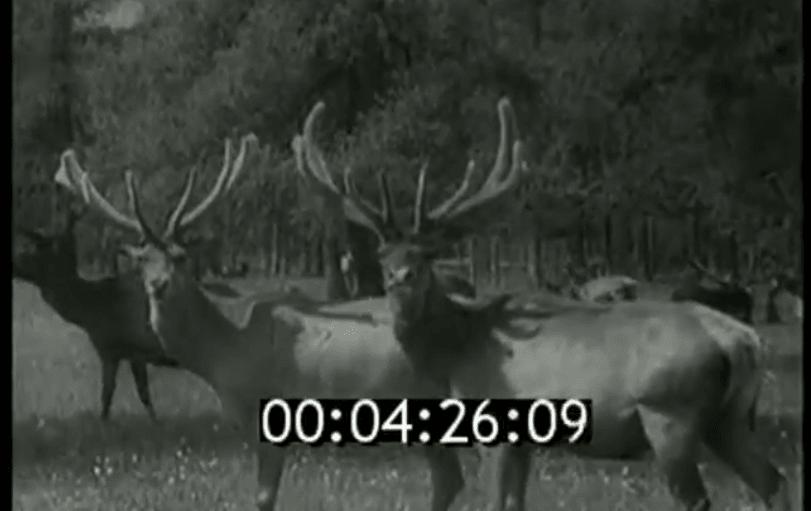 старинные кинохроники о Горном Алтае